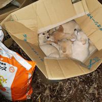 宇都宮動物園に捨てられていた子犬=同園提供