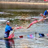 鴨川で実演された「友禅流し」。反物が川面を優雅に舞った=京都市中京区で、川平愛撮影