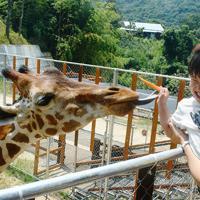 キリンの「モモタ」にニンジンをあげようとする男の子。長い舌に思わずびっくり=香川県東かがわ市のしろとり動物園で、金志尚撮影