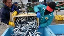 港に水揚げされたサンマ=三重県熊野市の遊木漁港で2019年1月8日、汐崎信之撮影