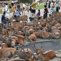 換気口付近に集まる奈良公園の鹿=奈良市で2019年8月8日午後6時33分、川平愛撮影