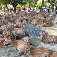 換気口付近に集まる鹿=奈良市で2019年8月8日午後5時32分、川平愛撮影