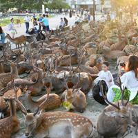 換気口付近に集まるシカに驚き写真を撮る観光客ら=奈良市で2019年8月8日午後6時12分、川平愛撮影