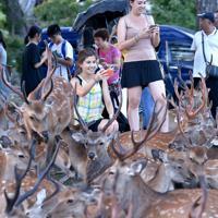 換気口付近に集まるシカに驚き写真を撮る観光客ら=奈良市で2019年8月8日午後6時23分、川平愛撮影