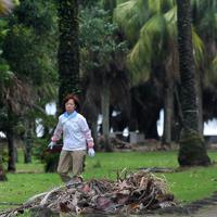 強風で落下したヤシの葉を集める人たち=宮崎市で2019年8月15日午前9時6分、津村豊和撮影