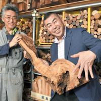 屋久杉の端材を手にする桂南光さん(右)と河村寿昌さん=愛知県一宮市で、大西岳彦撮影