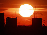 In this file photo dated July 25, 2019, a bird sits on a straw bale on a field in Frankfurt, Germany, as the sun rises during an ongoing heat wave in Europe. (AP Photo/Michael Probst)