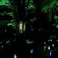 音や光、映像で森が演出されるナイトウオーク「カムイルミナ」=北海道釧路市で2019年8月6日、貝塚太一撮影