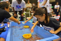 Children try to catch goldfish from a small pool at the 25th national goldfish-scooping championship in Yamatokoriyama, Nara Prefecture, on Aug. 18, 2019. (Mainichi/ Kenichi Kayahara)