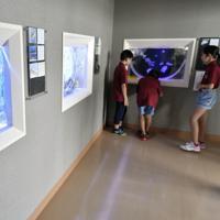 有明海の生き物を観察できるミニ水族館