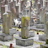 墓石の中には劣化が激しいものが目立つ=大阪市天王寺区の旧真田山陸軍墓地で2018年10月11日、平川義之撮影