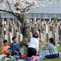 桜が満開の時期には墓地内の広場で花見をする人の姿も見られた=大阪市天王寺区の旧真田山陸軍墓地で2019年4月6日、平川義之撮影