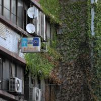 伸びた蔦が年月を感じさせる「代々木会館」の壁面=東京都渋谷区で2019年8月11日、手塚耕一郎撮影
