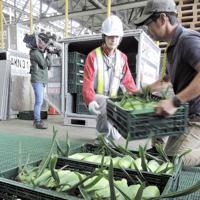 トウモロコシを航空コンテナに積み込む生産者ら=新千歳空港で2019年8月21日、阿部義正撮影