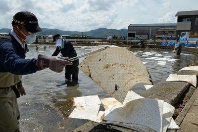 用水路や農地の水面に浮いた油を吸着マットで除去する人たち=佐賀県大町町で2019年9月3日午後1時19分、金澤稔撮影