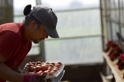 早朝、産みたての卵を大事そうに抱える小林廉さん。「これが、道内のあちこちに届けられるんだよ。今も誰か食べてるかな」とつぶやいた=北海道厚真町浜厚真で2019年6月25日、北山夏帆撮影