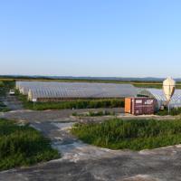 新しい小林農園の鶏舎。広い土地で平飼いされた鶏たちがのびのびと暮らしている=北海道厚真町浜厚真で2019年8月18日、北山夏帆撮影