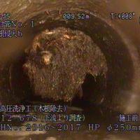 木の根が侵入し、流路を遮っている下水道管内部=千葉県柏市提供