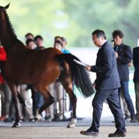 ホースインスペクションで馬の状態を確認し、手元の書類を見る獣医師の天谷友彦さん=東京都世田谷区で、吉田航太撮影