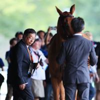 ホースインスペクションで馬の状態を確認する獣医師の天谷友彦さん=東京都世田谷区で、吉田航太撮影