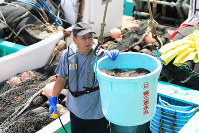 A fisherman examines the first haul after the Fukushima Prefectural Federation of Fisheries Co-operative Associations compiled a recovery plan, in Soma, Fukushima Prefecture, on Sept. 2, 2019. (Mainichi/Tatsuro Tamaki)