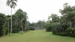 シンガポール植物園。奥に見えるのは水上ステージ(写真は筆者撮影)