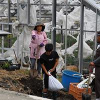 壊れた屋根瓦を覆うビニールシートを抑えるために土のうを作って運ぶ人たち=千葉県南房総市で2019年9月12日午後1時40分、北山夏帆撮影