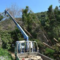 台風15号の影響で、住民の生活道路を覆った倒木を撤去する委託業者の作業員=千葉県館山市で2019年9月17日午前11時43分、手塚耕一郎撮影