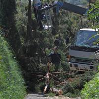 台風15号の影響で、住民の生活道路を覆った倒木を撤去する委託業者の作業員=千葉県館山市で2019年9月17日午前11時48分、手塚耕一郎撮影