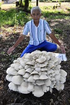 Yoshiatsu Mizumura poses with a cluster of niohshimeji mushrooms he found, in the Saitama Prefecture city of Sakado on Sept. 6, 2019. (Mainichi/Takashi Nakamura)