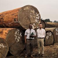 コンゴ盆地で伐り出された木材。その大部分が違法に生産された木材であると言われている=2019年7月撮影(大仲幸作さん提供)