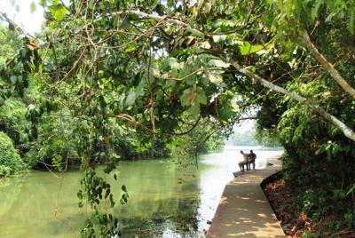 マクリッチ貯水池の湖畔遊歩道はシンガポール屈指の癒やしの自然空間(写真は筆者撮影)