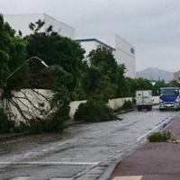 突風で街灯と木が倒れた宮崎県延岡市内=読者提供