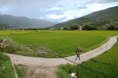 山間に広がる田んぼで、手作業で刈った草を入れた籠を背負って運ぶ農民=ブータン・パロで2019年8月17日、小川昌宏撮影