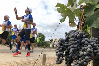 収穫を控えたワイン用ブドウ畑を走り抜けるランナーら=フランス南西部ボルドー地方で7日、賀有勇撮影