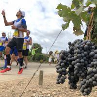 収穫を控えたワイン用ブドウ畑を走り抜けるランナーら=フランス南西部ボルドー地方で
