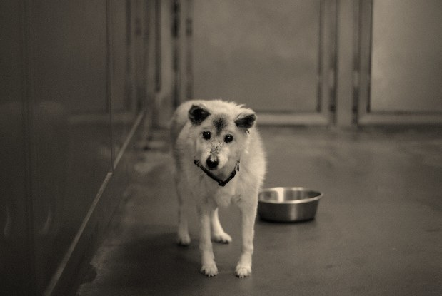 老犬たちの涙 捨てられた老犬の涙が訴える 殺処分テーマにフォト