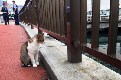 川に落ちた子猫を心配そうに見守る親猫とみられる猫=長崎市新地町で2019年10月1日午前8時25分、浅野翔太郎撮影