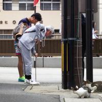 子猫の鳴き声がする側溝を心配そうに見つめる通行人と猫=長崎市新地町で2019年10月1日午前8時36分、浅野翔太郎撮影