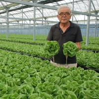 丹精を込めて栽培したサラダ菜を両手に持つ佐野誠さん=静岡県浜松市西区大久保町で