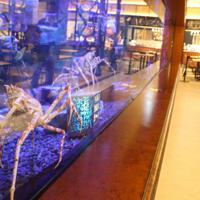 タカアシガニやアカエイが見られる「メルカドサマサ」内の駿河湾大水槽=静岡県沼津市東椎路のららぽーと沼津で