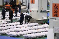 Frozen tuna are seen lined up at the Toyosu market in Tokyo's Koto Ward in the early morning of Oct. 11, 2019. (Mainichi/Shinnosuke Kyan)
