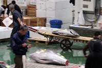 Tuna are seen being wheeled away after their purchase in an auction at the Toyosu market in Tokyo's Koto Ward, on Oct. 11, 2019. (Mainichi/Shinnosuke Kyan)