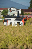 A farmer hurriedly harvests rice in preparation for upcoming powerful Typhoon Hagibis, in the northeastern Japan village of Yugawa, Fukushima Prefecture, on Oct. 10, 2019. (Mainichi/Seiichi Yuasa)