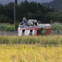 実証栽培の田んぼで稲を刈り取る人たち=福島県大熊町で2019年10月10日午前10時25分、和田大典撮影