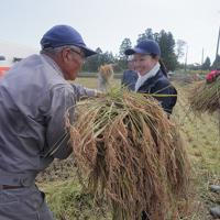 実証栽培の田んぼで稲を刈り取る人たち=福島県大熊町で2019年10月10日午前10時42分、和田大典撮影