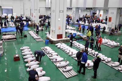開場から1年を迎えた豊洲市場に並べられたマグロ=東京都江東区の豊洲市場で2019年10月11日午前5時52分、喜屋武真之介撮影