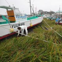 台風19号が近づき風雨が強まる中、漁船を陸に上げ電柱などに固定する漁師ら。50年漁師をしているという男性は「道路を越えて船を陸に上げたのは初めてだ」とつぶやいた=千葉県南房総市白浜で2019年10月12日午前7時47分、手塚耕一郎撮影