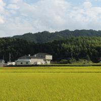 全長238メートルの室宮山古墳(手前の丘陵)。左が後円部、右が前方部=奈良県御所市で大森顕浩撮影