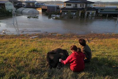 浸水した牛舎に取り残され、船で引っ張り岸にあげたものの、衰弱した子牛をなでながら、他の牛の救出を見守る人たち=宮城県大郷町粕川で2019年10月13日午後4時37分、和田大典撮影